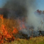 How Fire Shaped the Tallgrass Prairies of America's Heartland